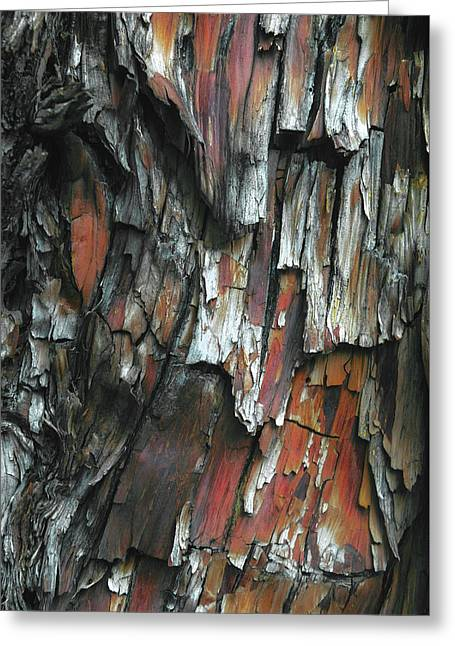 Burnt Tree Abstract Greeting Card by Joseph Smith