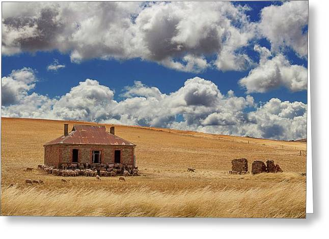 Greeting Card featuring the photograph Burra by Tim Nichols