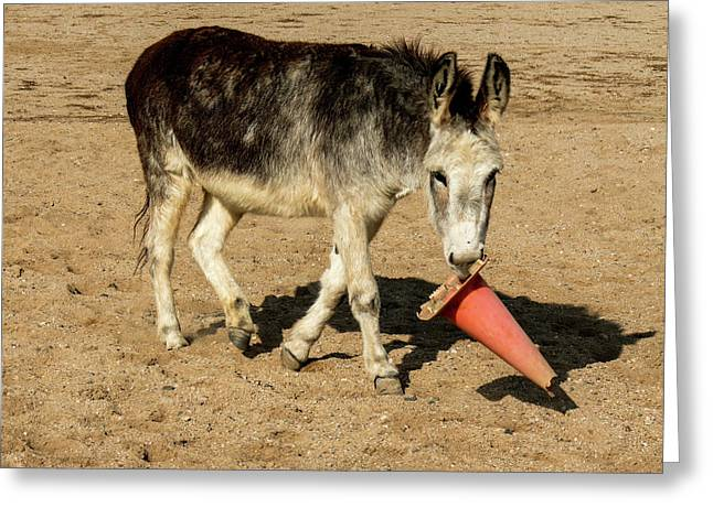 Burro Playing With Safety Cone Greeting Card by Elizabeth Hershkowitz