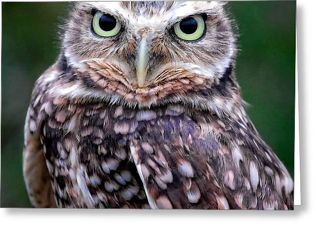 Burrowing Owl Greeting Card by Athena Mckinzie
