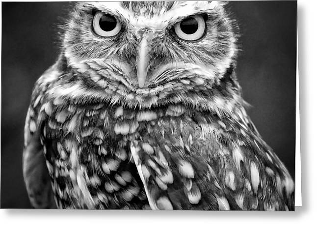 Burrowing Owl In Black And White Greeting Card by Athena Mckinzie