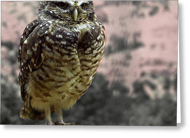 Burrowing Owl Greeting Card by Joseph Skompski