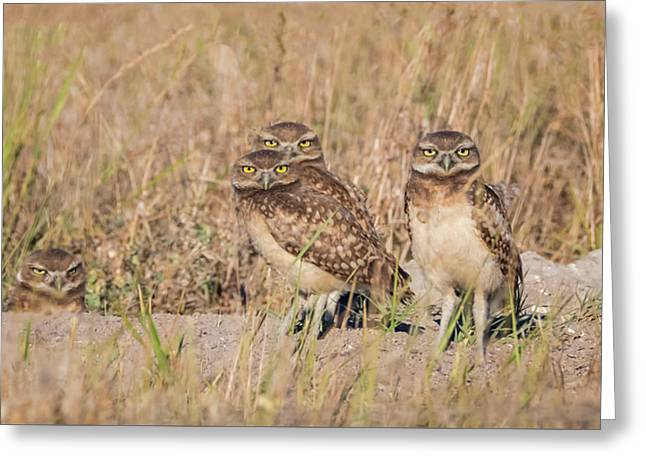 Burrowing Owl Party Greeting Card