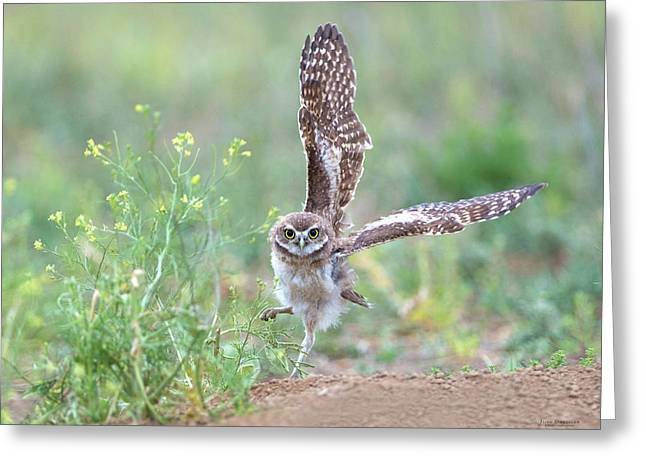 Burrowing Owl Spies Grasshopper Greeting Card
