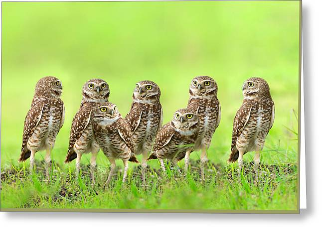 Burrowing Owl Greeting Card by Thy Bun