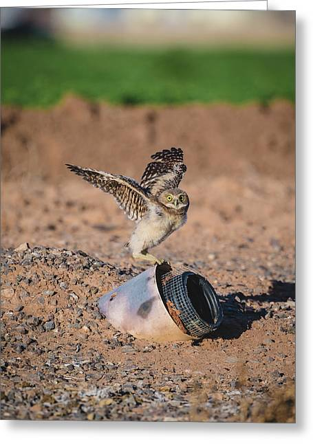 Burrowing Owlet Stretching His Wings Greeting Card