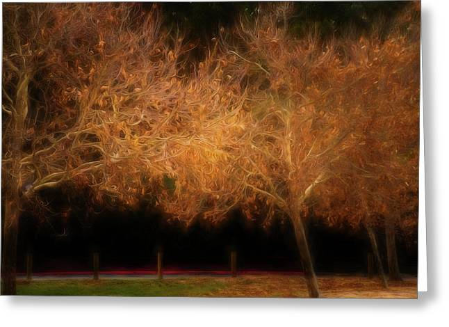 Burst Of Autumn Greeting Card by Terry Davis