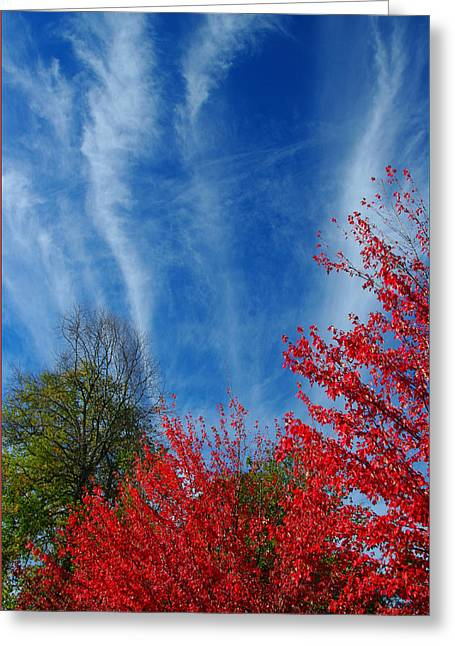 Burst Of Color Greeting Card by Gerry Tetz