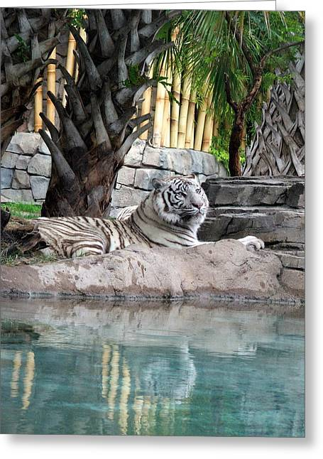 Busch Tiger Greeting Card by Wayne Skeen