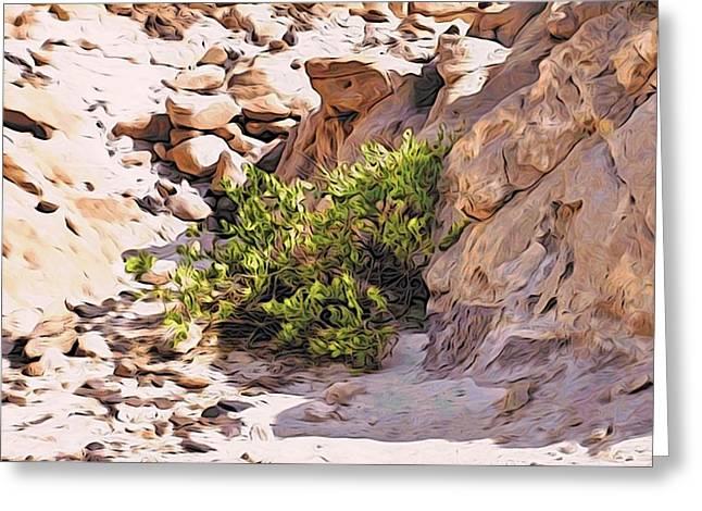 Bush In The Sinai Desert Greeting Card by Alexandre Ivanov