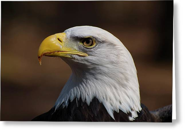 bust image of a Bald Eagle Greeting Card