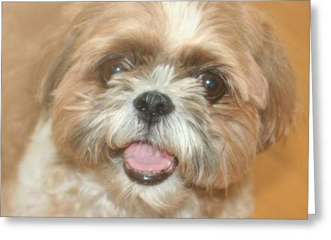 Buster Greeting Card by Amy Holmes