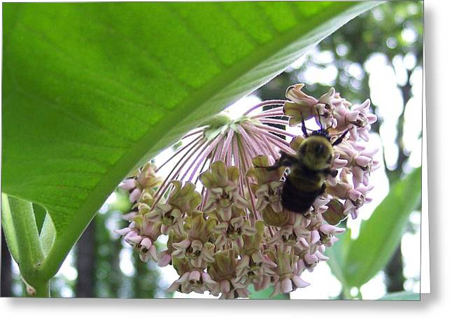 Busy As A Bee Greeting Card by Anna Villarreal Garbis