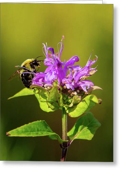 Busy As A Bee Greeting Card
