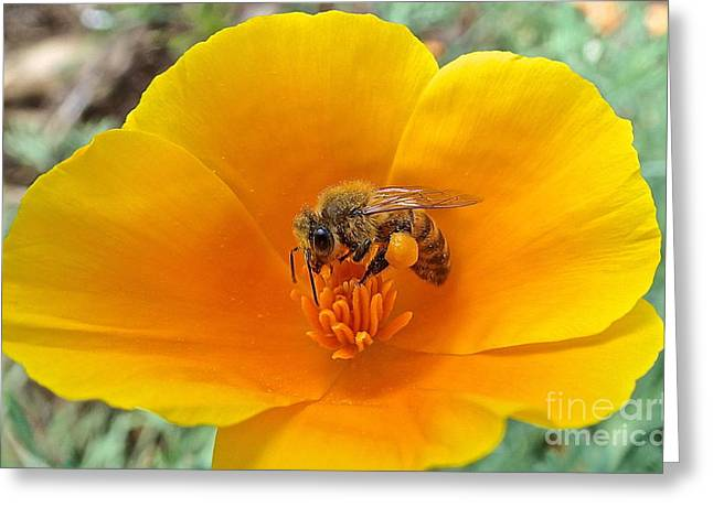 Busy Bee Greeting Card by Cheryl Cutler