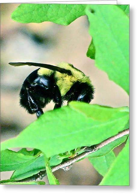 Busy Bee Greeting Card by Debra     Vatalaro