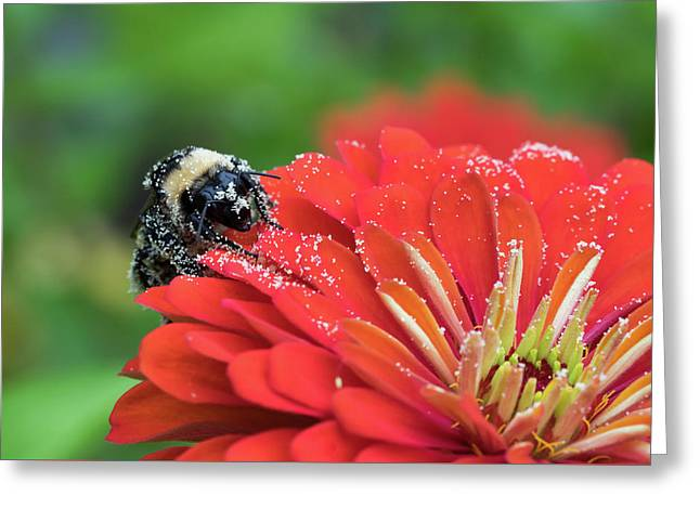 Busy Bee Greeting Card by Denise McKay