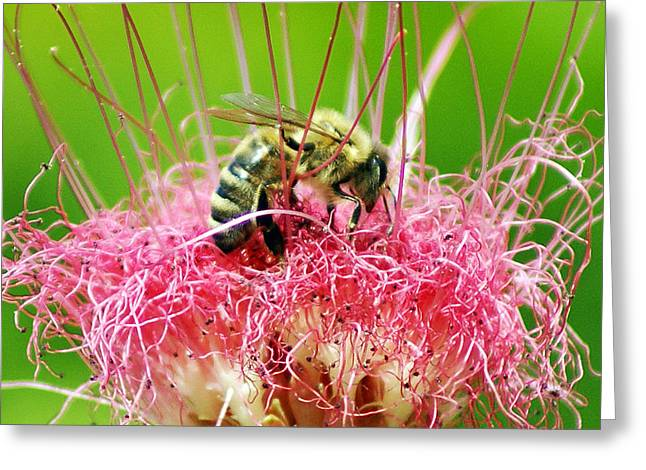 Busy Bee Greeting Card by Holly Kempe