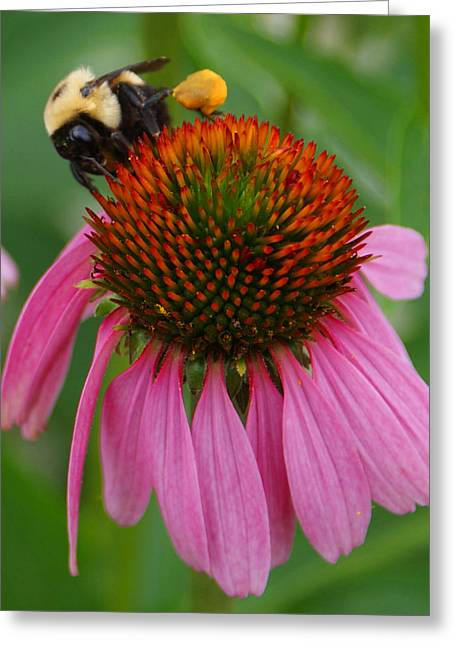 Busy Bee Greeting Card by Jean Haynes