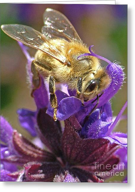 Busy Bee Greeting Card by Katie LaSalle-Lowery