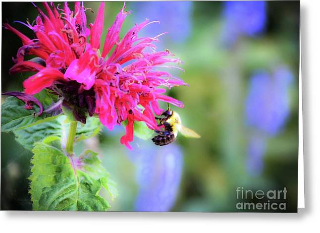 Busy Bee Greeting Card by Lisa Kilby