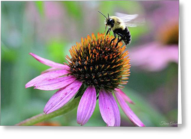Greeting Card featuring the photograph Busy Bee by Trina Ansel