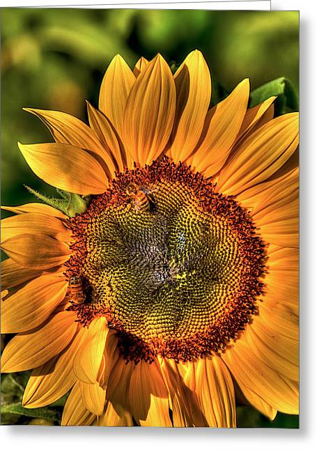 Busy Bees Greeting Card