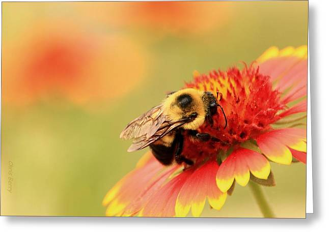 Greeting Card featuring the photograph Busy Bumblebee by Chris Berry