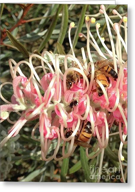 Busy Buzzing Bees On Grevillea Flower Greeting Card