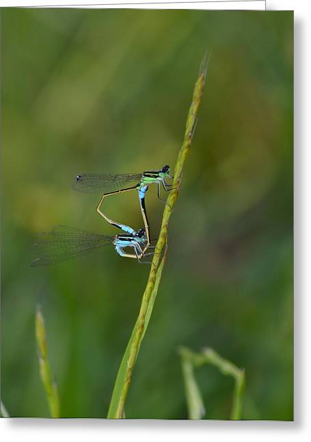 Busy Damsels Greeting Card