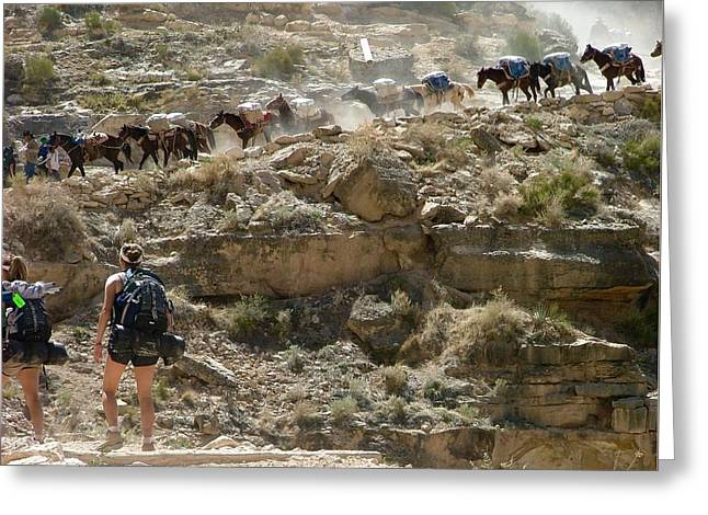 Busy Day On Havasu Canyon Trail Greeting Card by Brent Sisson