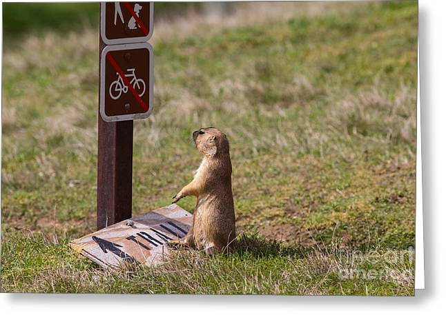 But I Drove 300 Miles To Ride This Trail Greeting Card by Scott Nelson