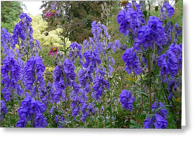 Butchart Gardens Blues Greeting Card