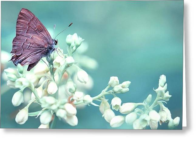 Greeting Card featuring the photograph Buterfly Dreamin' by Mark Fuller