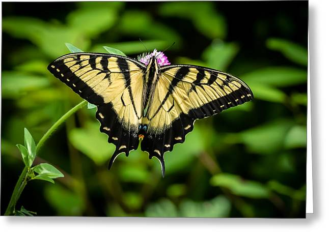 Butter Fly Greeting Card by Gary Migues