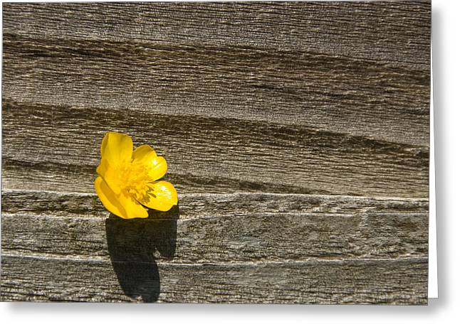 Buttercup And Wood Greeting Card by Peter Jarvis