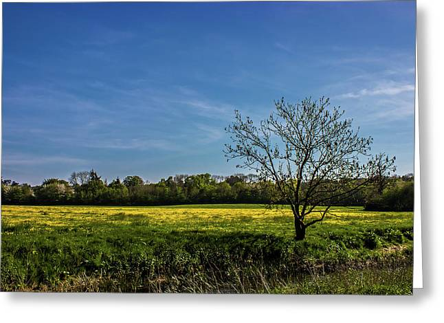 Buttercup Fields Greeting Card by Martin Newman