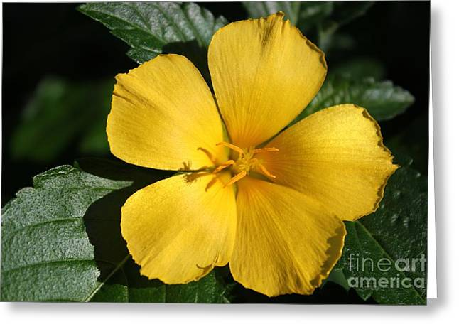 Buttercup Sunshine Greeting Card