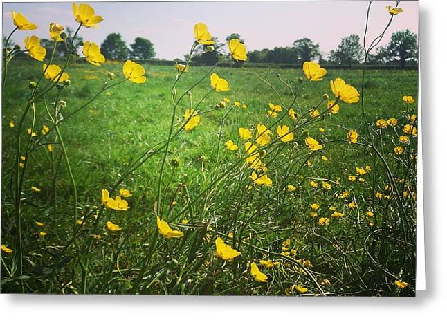 Buttercups Meadow Greeting Card