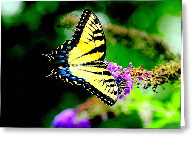 Butterflie Greeting Card by Aron Chervin