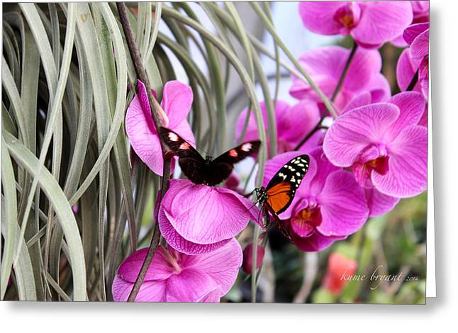 Butterflies And Orchids Greeting Card by Kume Bryant