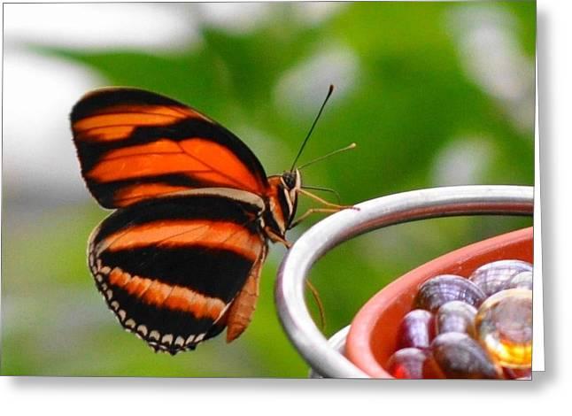 Butterflies Are Blooming Greeting Card by Debra  Miller