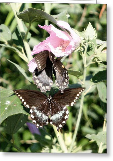 Butterflies Are Free 3 Greeting Card