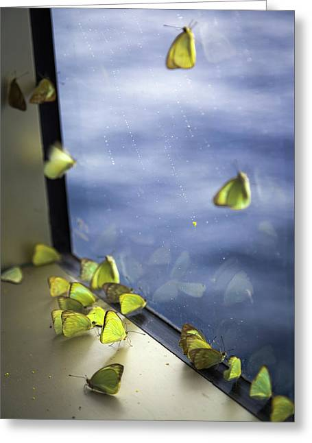 Butterflies At Sea Greeting Card
