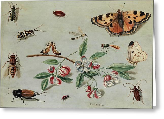 Butterflies, Beetles, Caterpillar And Flowers Greeting Card