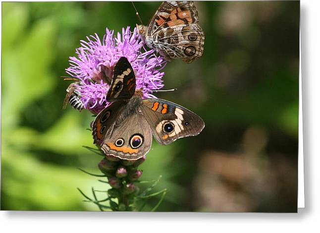 Greeting Card featuring the photograph Butterflies And Purple Flower by Cathy Harper