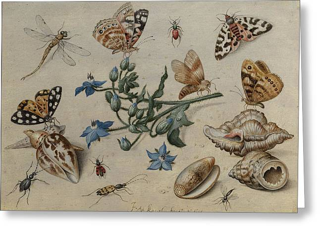 Butterflies, Clams, Insects And Flowers Greeting Card