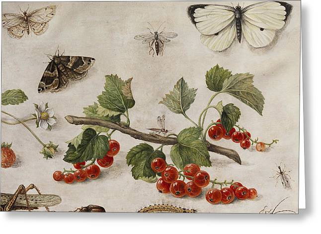 Butterflies, Insects And Currants Greeting Card