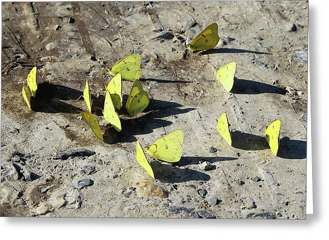 Greeting Card featuring the photograph Butterflies by Melinda Blackman