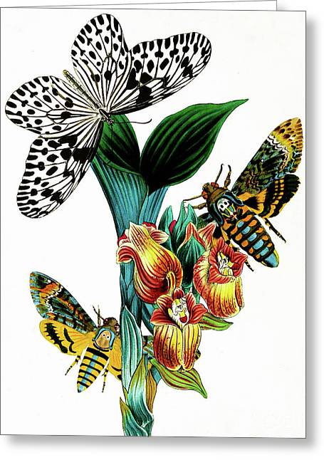 Butterflies, Moths And Orchids, Vintage Botanical Painting Greeting Card by Tina Lavoie